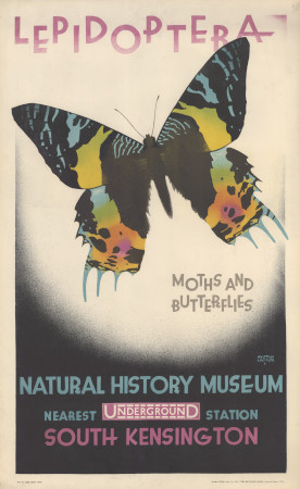 Poster; Natural History Museum; lepidoptera, by Austin Cooper, 1928