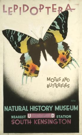Related object: Poster artwork; Lepidoptera, by Austin Cooper, 1928